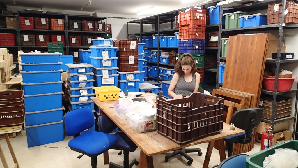 The author studying miniature pots in the basement of the Institute for Aegean Prehistory (INSTAP), Crete in June 2018. Photograph by Jonathan M. Flood.