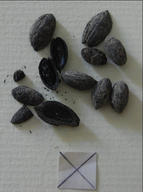 Carbonized olive seeds
