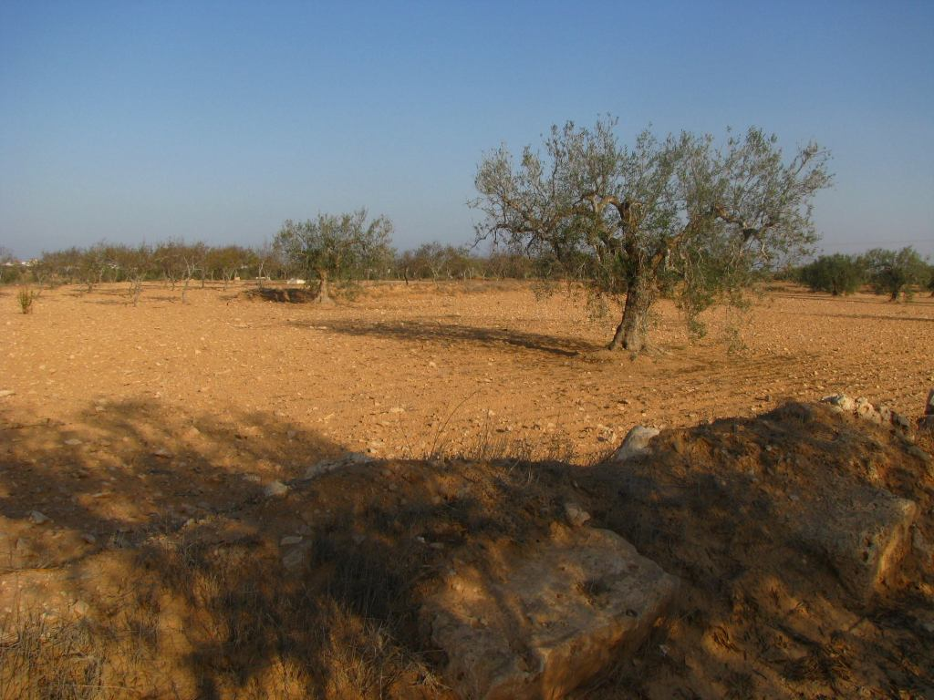 "The landscape of Zita (""Olive City""), Tunisia (photo by M. Daniels)"