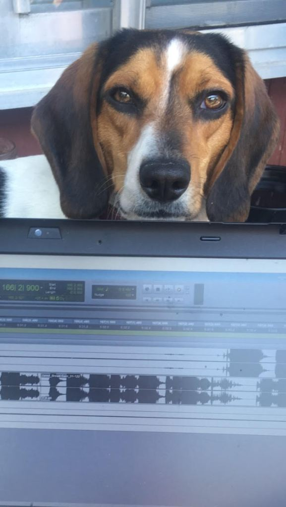 Cassandra's dog looking over the top of her laptop during an editing session.