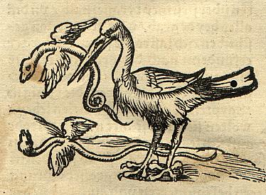 A drawing on yellow parchment paper: a bird of prey is standing facing to the left, with a small winged snake in its mouth. Another winged snake is lying on the ground behind the bird, presumably dead. The bird has a long straight beak and strong talons. The picture is unpainted.